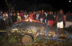 Lolong the croc on the day of his capture in 2011